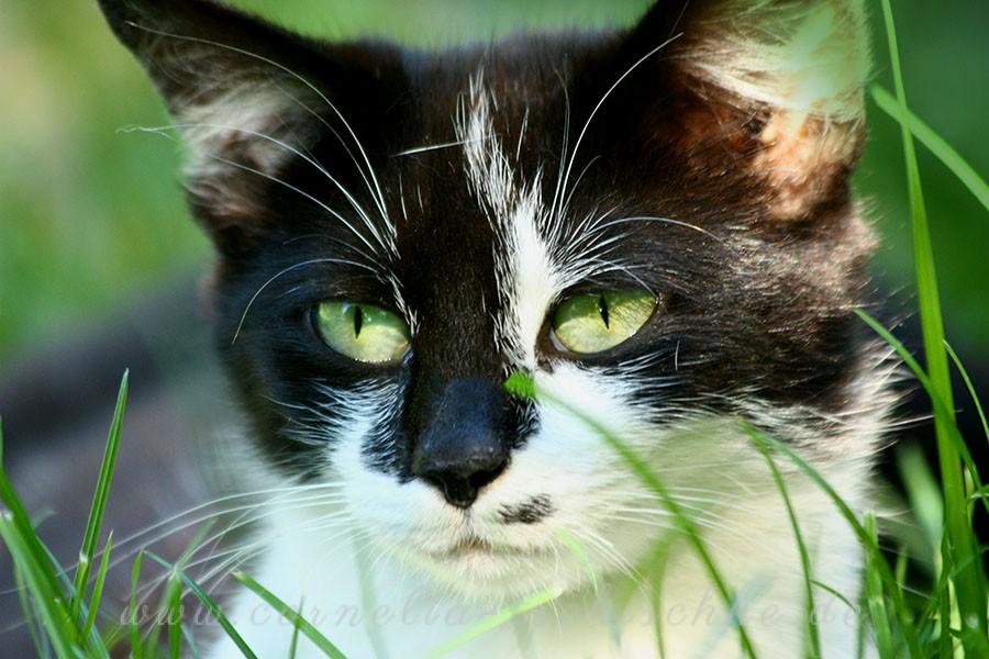 cat-eyes_1