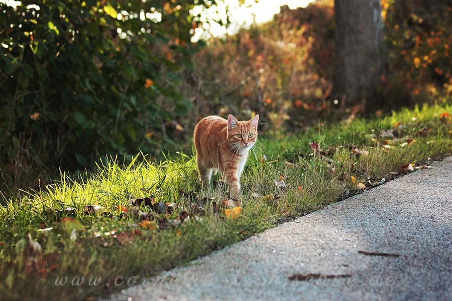 catwalk_1