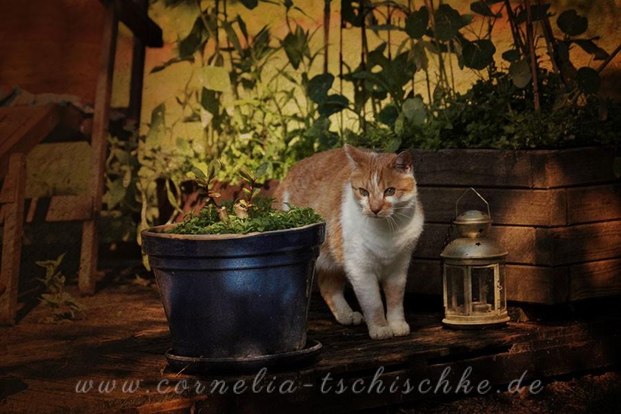 gardencat_1