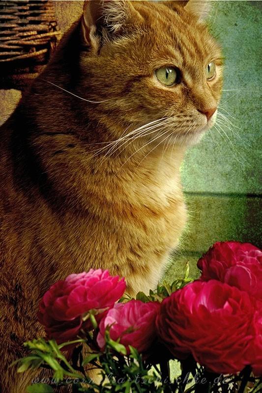 rosecat_1