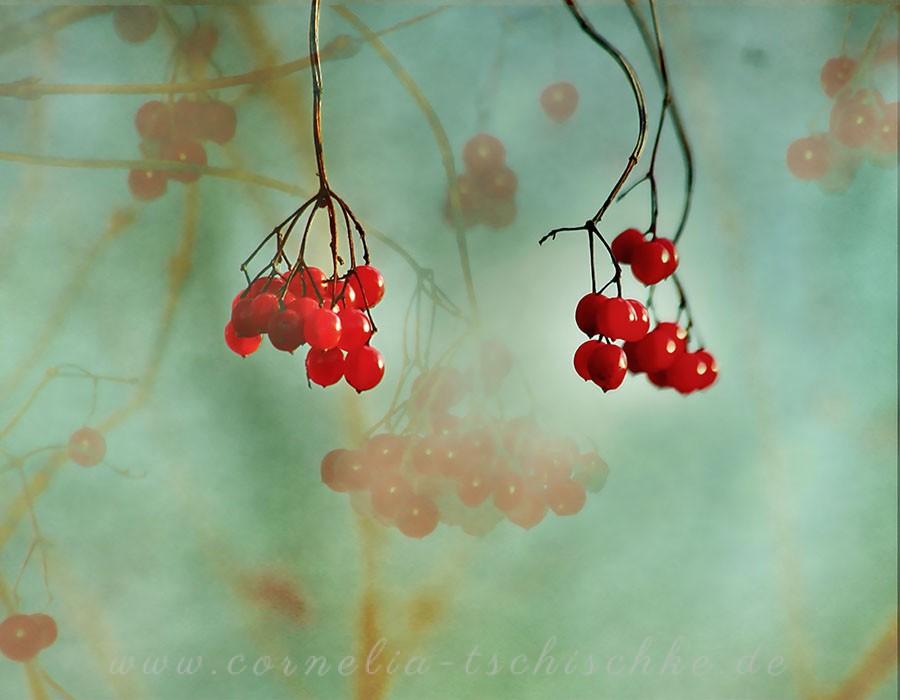 snowball_berries_Glasbeere