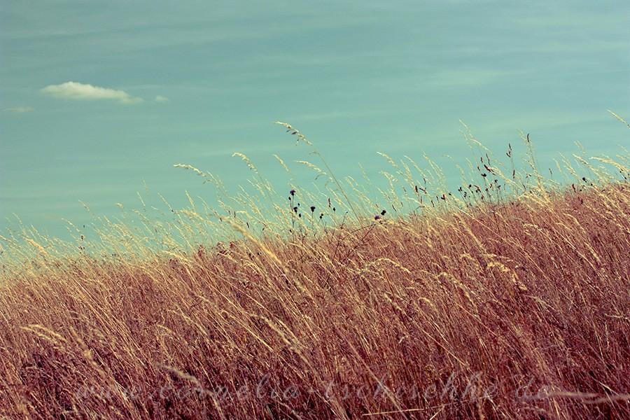 summerfield_sommerfeld_1