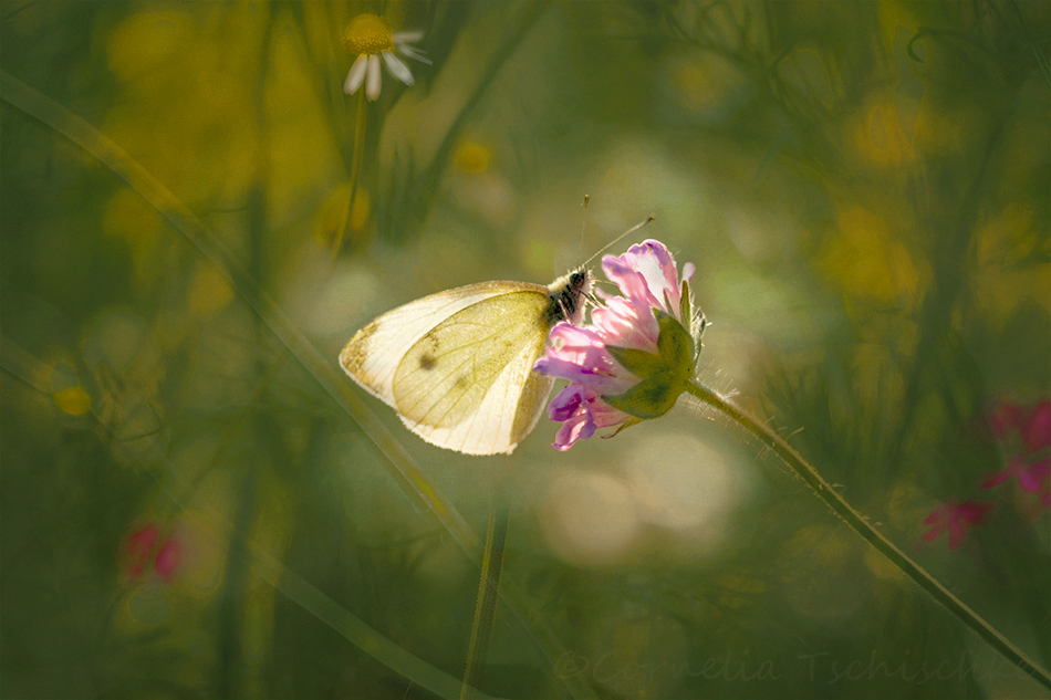 dreamy_meadow