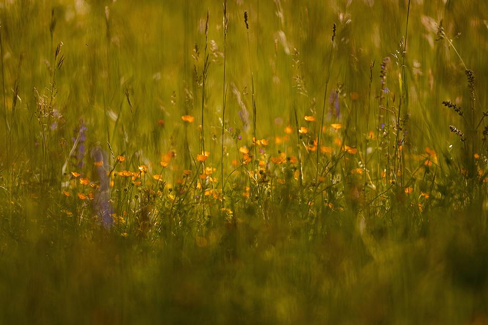 die_wiese_the_meadow