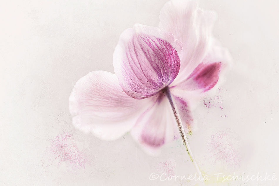 back-anemone